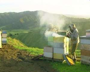 Beekeepers Checking Hives