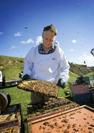 Beekeepers getting stung