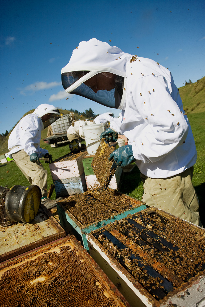 The Ron Mossop Youth Scholarship in Beekeeping