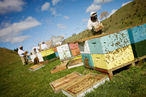 beekeeping edit hive