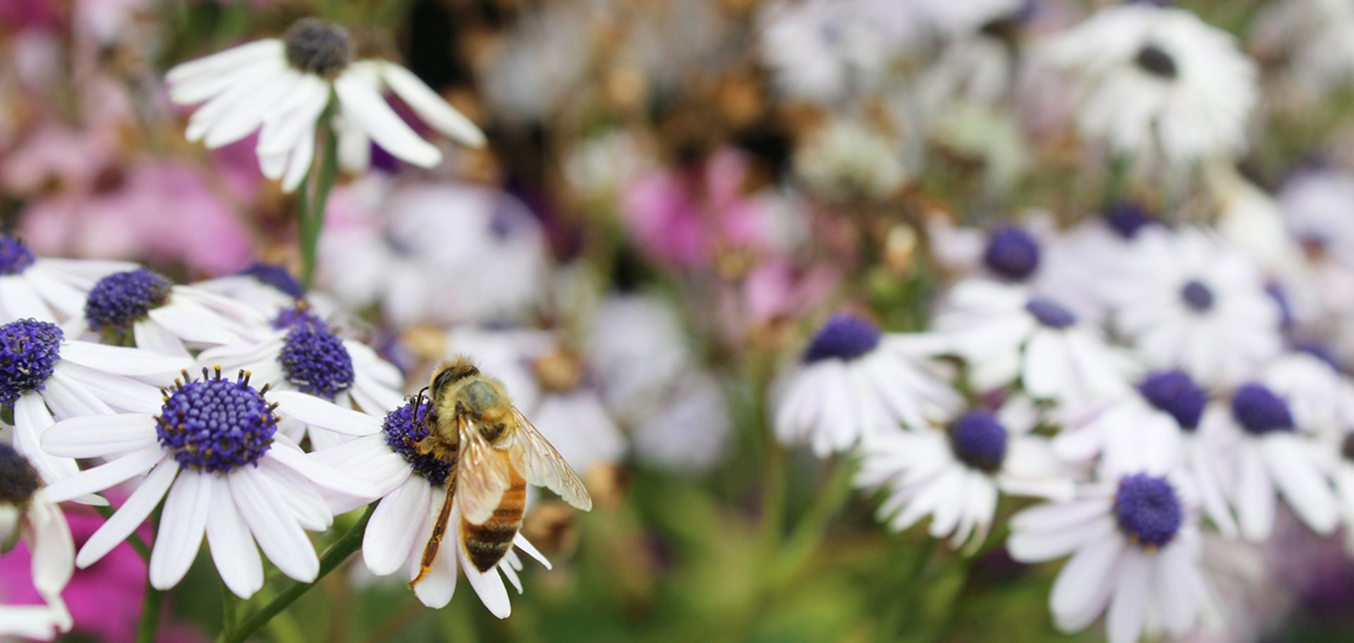 Bee Friendly Environment